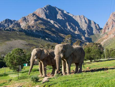 4 atrações imperdíveis em Cape Town e arredores