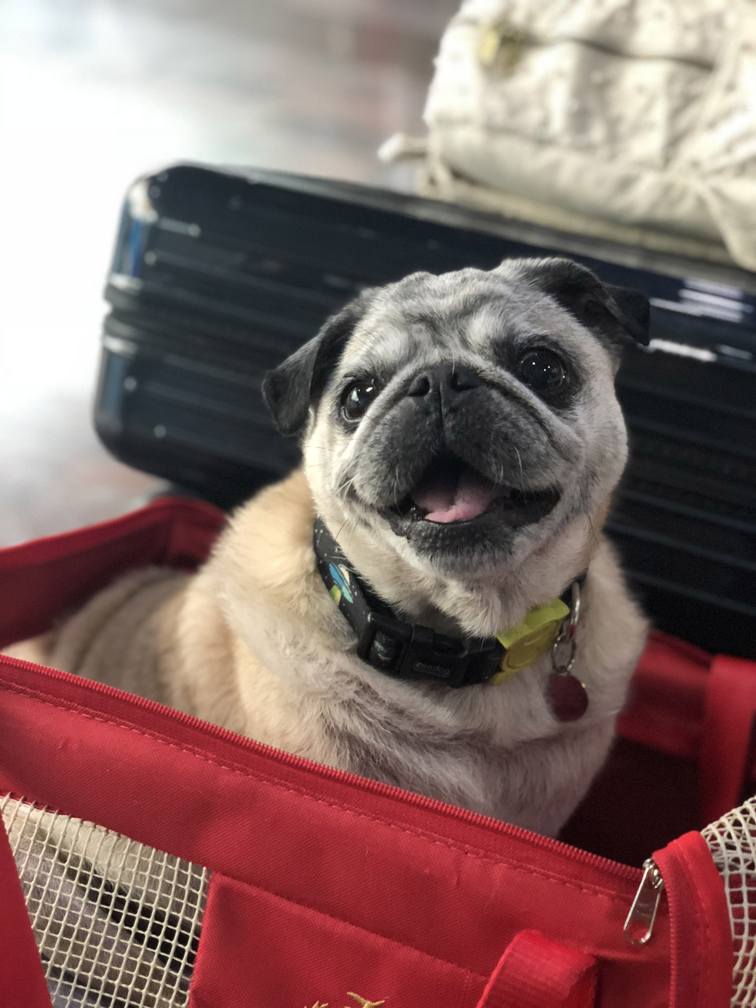 Viajando com Pets