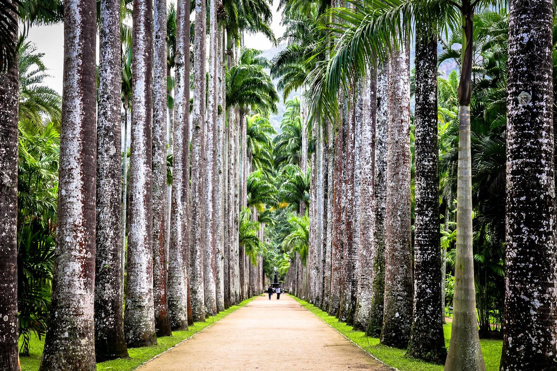 Jardim Botânico Rio