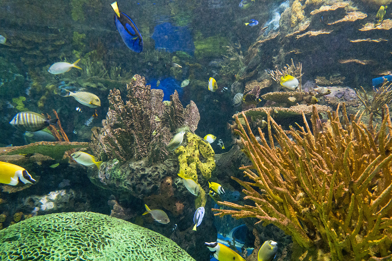 Toronto - Ripley's Aquarium
